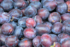 Fresh purple plums Stock Images