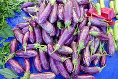Fresh Purple Stripe Eggplants. Many purple striped eggplants, or aubergines, for sale at a weekly open air Greek farmers market, or laiki, Greece Royalty Free Stock Photo