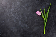 Fresh purple tulip flower. On dark stone table. Top view with copy space Royalty Free Stock Images