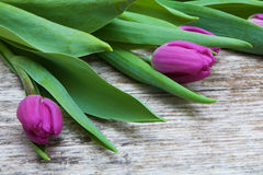 Fresh purple tulip flowers on wooden table Royalty Free Stock Photography