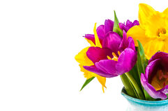 Fresh purple tulip, yellow flowers close up isolated on white background Bouquet snowdrops on wooden background. Spring. Fresh purple tulip, yellow flowersclose Royalty Free Stock Images