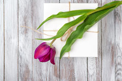 Fresh purple tulips bouquet and gift box on wooden background. Space for text. Top view. Stock Image
