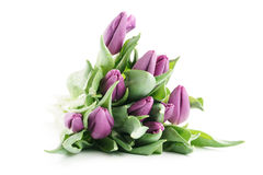 Fresh purple tulips isolated on white. Background Royalty Free Stock Image