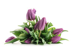 Fresh purple tulips isolated on white. Background Royalty Free Stock Photos