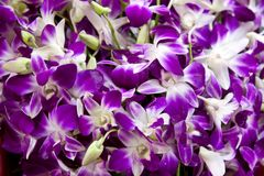Fresh purple violets Royalty Free Stock Photos