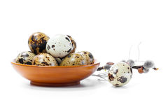 Fresh quail egg in bowl Stock Photography