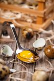 Fresh quail egg. Close up of raw quail eggs in spoon on wooden background Stock Photo