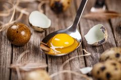 Fresh quail egg. Close up of raw quail eggs in spoon on a rustic wooden table Royalty Free Stock Photography