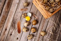 Fresh quail egg. On rustic wooden background Stock Image