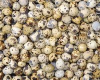 Fresh quail egg. On the white background Royalty Free Stock Image