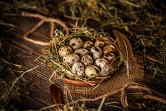 Fresh quail egg. In hay nest on rustic  background Royalty Free Stock Photo