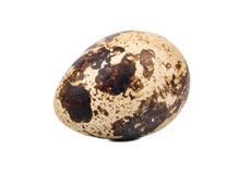 Quail egg. Fresh quail egg isolated on white background Royalty Free Stock Image
