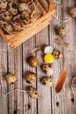 Fresh quail egg. Top view of quail eggs on wooden background Royalty Free Stock Photos