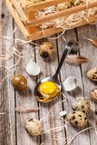 Fresh quail egg. Unboiled quail eggs in spoon on wooden background Royalty Free Stock Photo
