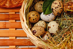 Fresh quail eggs in basket. Delicacy. Stock Photo
