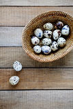 Fresh quail eggs in a basket Stock Photo