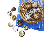Fresh quail eggs in a basket Royalty Free Stock Photos
