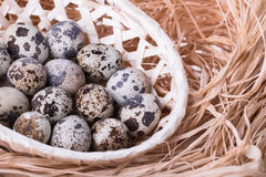 Fresh quail eggs in a basket Royalty Free Stock Image