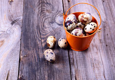 Fresh quail eggs in a bucket on a gray wooden surface Stock Photography