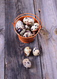 Fresh quail eggs in a bucket Royalty Free Stock Images