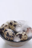 Fresh quail eggs with feathers in handmade bowl Royalty Free Stock Image