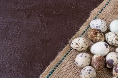 Fresh quail eggs. Food concept Stock Image