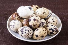 Fresh quail eggs. Food concept Royalty Free Stock Image