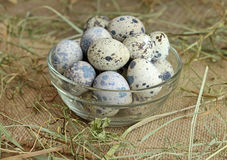 Fresh quail eggs in glass bowl. Close-up Stock Images