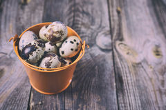 Fresh quail eggs in an iron orange bucket Royalty Free Stock Photo