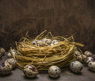 Fresh quail eggs in the nest border place for text wooden rustic background top view close up Royalty Free Stock Photo