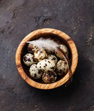 Fresh quail eggs Stock Photography