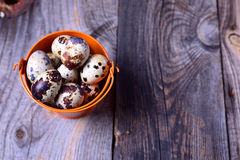 Fresh quail eggs in an orange bucket Royalty Free Stock Photos
