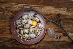 Fresh quail eggs in a plate. On a wooden background Royalty Free Stock Images