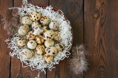 Fresh quail eggs in a plate on a wooden background. Rustic style. Top view and copy space Stock Photo