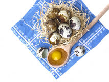 Fresh quail eggs Stock Image