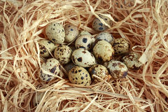 Fresh quail eggs in a straw nest Royalty Free Stock Photo