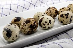 Fresh quail eggs on a white plate. Fresh organic quail eggs on a white plate Royalty Free Stock Images