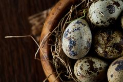 Fresh quail eggs in a wooden bowl on a homespun napkin over dark wooden background, top view, close-up. Some copy space for your inscription. Textured royalty free stock image