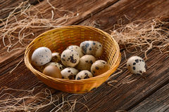 Fresh quail eggs Royalty Free Stock Image