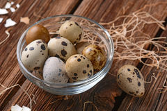 Fresh quail eggs Stock Images