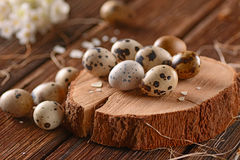 Fresh quail eggs Royalty Free Stock Images