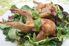 Fresh quails. Two fresh quails on a plate with mixed salad Stock Photography