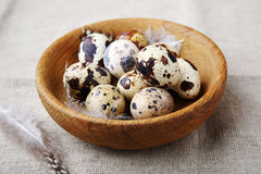 Fresh quails eggs and feathers. Easter food Stock Images