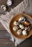 Fresh quails eggs Royalty Free Stock Images