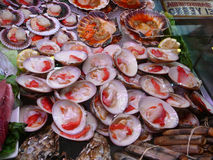 Fresh Queen Scallops. At Malaga Market Royalty Free Stock Photography