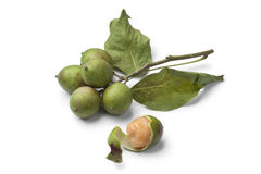 Fresh quenepa fruit. With leaves on white background Stock Image