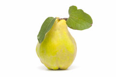 Fresh quince Royalty Free Stock Photo