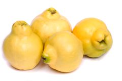 Fresh quince fruit Stock Photos