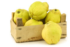 Fresh quince fruits  Cydonia oblonga. In a wooden crate on a white background Royalty Free Stock Photography