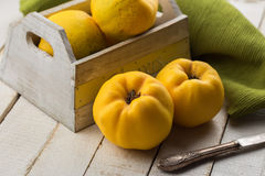 Fresh quinces. In box on white table. Selective focus. Rustic style Royalty Free Stock Photos